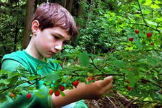 Wild berry picking - when, where & what to forage for a summer full of sweetness. Plus tips for success with #kids #GROWmethod
