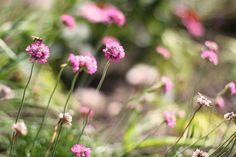 Beplantingtips: bekijk mooie voorbeelden, zoek inspiratie en geef uw tuin een unieke uitstraling door te letten op kleurschakeringen en diversiteit.
