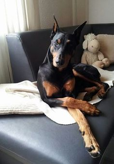 Sandra Nusser My goal in life is to be as good of a person my dog already thinks I am.  That goes out to all you Dobe lovers, with lovely greets from Germany. I so appreciate the pictures from all over the world, moments taken in a daily life with this wonderful breed. Take care!