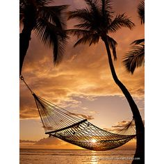Silhouette Of A Hammock Hanging Between Two Palm Trees Near Ocean At... ❤ liked on Polyvore featuring backgrounds, pictures, beach, photos and pics