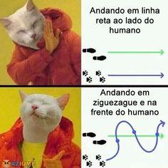 O que os gatos gostam - Aziume - Blog de humor com merda na cabeça!   Aziume – Blog de humor com merda na cabeça!