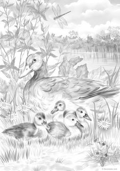 Ducks on a Walk - Printable Adult Coloring Page from Favoreads (Coloring book pages for adults and kids, Coloring sheets, Colouring designs) - Colouring Pages Bird Coloring Pages, Printable Adult Coloring Pages, Coloring Books, Kids Coloring, Coloring Sheets, Bird Drawings, Cool Art Drawings, Animal Drawings, Deer Drawing