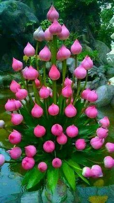 Strange n Beautiful Flowers: Nature is Amazing – The Mommypedia Strange Flowers, Unusual Flowers, Unusual Plants, Rare Flowers, Exotic Plants, Flowers Nature, Pink Flowers, Lotus Flowers, Beautiful Flowers Photos
