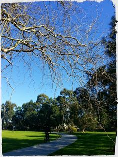 Cooks River path, by Natalie Hitoun.