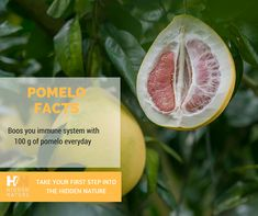 Pomelos have high content of Vitamin C which is an antioxidant that provides various functions such as healthy gums and skin and is able to promote absorption of iron from meat sources. Pomelos have folic acid and dietary fiber. Continue your path into the hidden nature with Hidden Nature Organic Turmeric Curcumin on SALE  on Amazon ➡️ https://goo.gl/1kMhUD