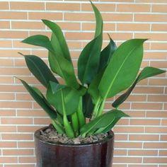 Photos - 15 good Home Decoratie Gallery Front Garden Landscape, Garden Paths, House Plants Decor, Plant Decor, Mini Plantas, Deck Landscaping, Apartment Plants, Little Plants, Cactus Plants