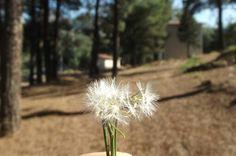 Little house Little dandelion