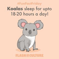 A lot of parents with little ones (myself included) must envy the koala who sleeps hours a day! Hopefully you get the chance to sleep as well as a koala this weekend! Animal Facts For Kids, Fun Facts For Kids, Fun Facts About Animals, Jokes For Kids, Science For Kids, Australia Fun Facts, Australia Animals, Teaching Kindergarten, Cool Pets