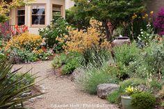 Gravel path and perennial border in California backyard garden with no lawn; Schneck Garden