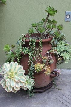 sedums in a strawberry pot