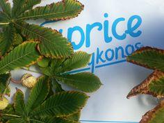 #autumn #leaves #chestnut #details #decoration #inspiration #greece #mykonos Flower Vases, Flower Arrangements, Flowers, Rice Bar, Plant Aesthetic, Stone Texture, Turquoise Color, Mykonos, Autumn Leaves