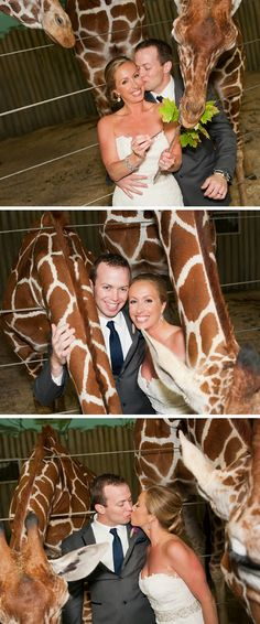 Brookfield Zoo Wedding Photographer!!