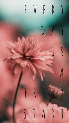 Everyday is a fresh start Phone Wallpaper Quotes, Quote Backgrounds, Aesthetic Iphone Wallpaper, Pretty Quotes, Cute Quotes, Words Quotes, Pink Quotes, Sayings, Inspirational Quotes Wallpapers
