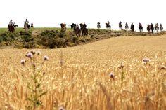 Encierros por vereda #Moratalla #Vacas #Caballos #SantoCristo