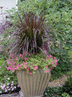 I love my 2013 trial of Supertunia® Watermelon Charm Petunia with purple fountain grass.