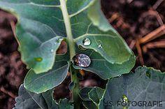Wassertropfen auf einem Blatt   Flickr - Photo Sharing! Photography Photos, Plant Leaves, Explore, Plants, Water Drops, Flora, Plant, Exploring