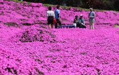 husband-plants-flowers-blind-wife-kuroki-shintomi-26