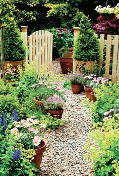 Pretty cottage garden. Gravel path, terracotta pots. Basic picket fence painted a pretty yellow