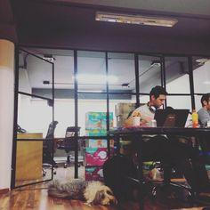 Siempre nos alegra recibir poolers perrunos. @thepoolmx es único coworking #petfriendly en Polanco y Monterrey. Visítanos.
