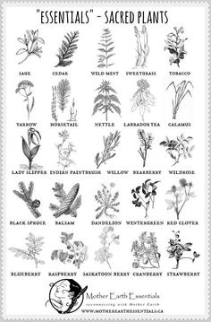 The list of essential sacred plants for magickal workings, rites and rituals. Healing Herbs, Natural Healing, Sacred Plant, Hedge Witch, Medicinal Plants, Book Of Shadows, Kraut, Herbal Medicine, Mother Earth