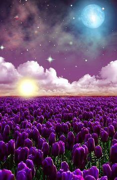 Beautiful Nature Wallpaper, Beautiful Moon, Beautiful Landscapes, Beautiful Gardens, Beautiful Images, Tulips Flowers, Purple Flowers, Stars Night, Moon Stars