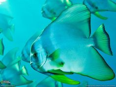 underwater fish - Google Search