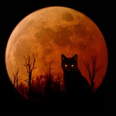 """""""When witches go riding, and black cats are seen, the moon laughs and whispers, 'tis near Halloween.""""  skeletalroses:    Dark Cat by ~Ciaetyn"""