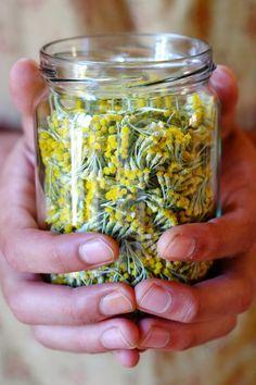 Oleolito di elicriso - GranoSalis - Blog di cucina naturale e consapevole Natural Beauty Recipes, Flavored Oils, Love Natural, Natural Health Remedies, Calendula, Medicinal Plants, Trees To Plant, How To Dry Basil, The Cure