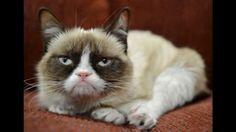 Felino de 10 kilos tuvo de rehenes a sus propios dueños. (Foto Referencial: AP)