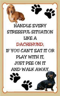 The Wiener dogs answer for everything. Dachshund Stressful Situation Magnet for The Refrigerator Funny Dachshund, Mini Dachshund, Dachshund Puppies, Daschund, Cute Puppies, Cute Dogs, Dachshund Quotes, Vintage Dachshund, Dachshund Gifts