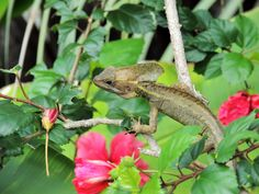 Flowers and a lizard.......
