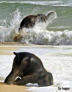Funny pictures about Happiest baby elephant ever. Oh, and cool pics about Happiest baby elephant ever. Also, Happiest baby elephant ever photos. Little Elephant, Elephant Love, Happy Elephant, Funny Elephant, Indian Elephant, Elephant Head, Baby Animals, Funny Animals, Cute Animals