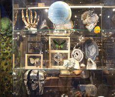 The Evolution Store Window. 120 Spring Street New York City