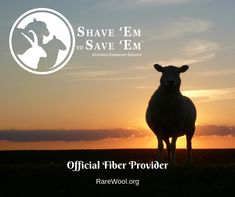 The Livestock Conservancy Rush Order Tees, Sheep Breeds, Etsy Coupon, Sources Of Fiber, The Shepherd, Solitude, Livestock, Wool Yarn, Flocking