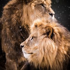 Brothers by Annette Wagner on 500px