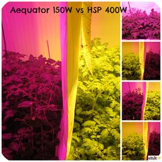 #LED #horticulture #agriculture #grow #lighting  www.aequator.at Led, Horticulture, Lighting, Home Decor, Garden Planning, House, Homemade Home Decor, Vegetable Gardening, Light Fixtures