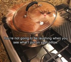 Funny Animal Pictures Of The Day - 20 images