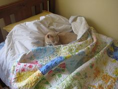 recycled sheet quilt -- rather than paying  per yard for fancy quilting fabric, make a quilt from the old sheets you can find in grandma's closet or your local thrift store bins