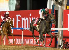 Ride him like Zenyatta. That was the plan jockey Mike Smith turned to when 'TDN Rising Star' Arrogate (Unbridled's Song), the overwhelming international favourite for Saturday's G1 Dubai World Cup, found himself last going past …