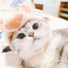 Cute Baby Cats, Cute Funny Animals, Kittens Cutest, Cats And Kittens, Funny Cats, Stupid Cat, Cute Cat Memes, Cute Cat Wallpaper, Cat Icon