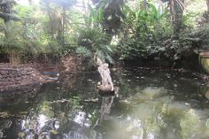 Garden in Funchal Funchal, Aquarium, Garden, Goldfish Bowl, Garten, Gardens, Fish Tank, Aquarius, Tuin