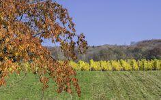 Herfstkleuren in Zd-Duitsland