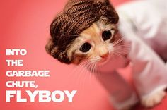 Princess Leia cat