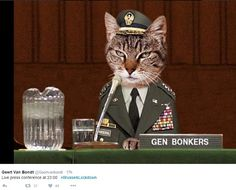Belgian Twitter users post cat pictures as police hunt Paris attack killers | Daily Mail Online