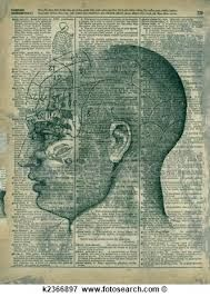 Image result for phrenology diagram royalty free