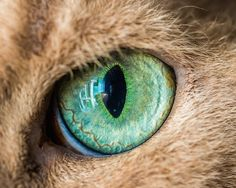 Mesmerizing Macro Photos of Cats' Eyes by Andrew Marttila - My Modern Met
