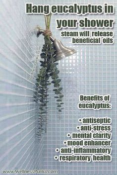 Did you know that if you hang eucalyptus in your shower it can help in many different ways, such as: