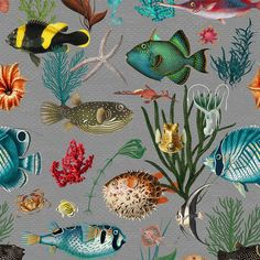 Fish Wallpaper, Peel And Stick Wallpaper, Tropical Wallpaper, Wallpaper Ideas, Outdoor Cushion Covers, Teal Coral, Traditional Wallpaper, Easy Install, Textured Walls
