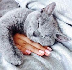 Eine süße Katze
