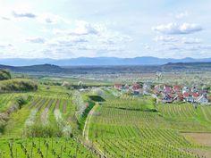 Königschaffhausen Blick nach Sasbach und in die Vogesen